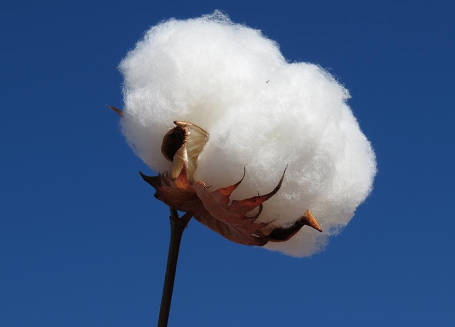 malha 100% algodão