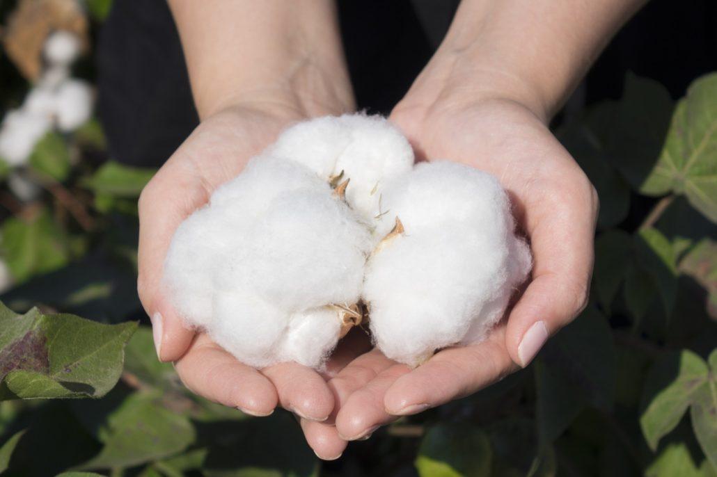 características malha 100% algodão